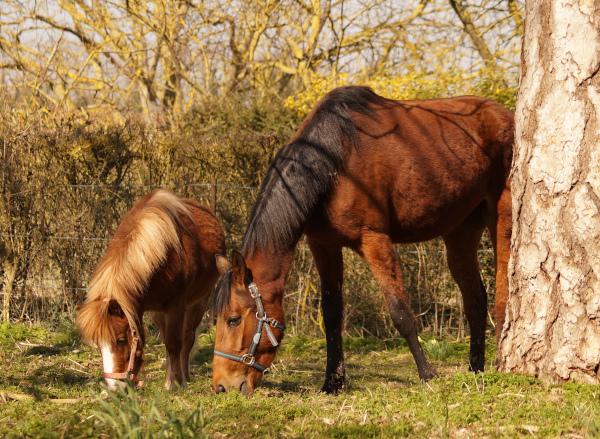 Animalis welfare naturopathie animale promenade visite à domicile pet-sitting 76 60 27 Gournay-en-Bray Beauvais Oise Hauts-de-France Normandie Ile de France naturopathe animalier pet-sitter chevaux